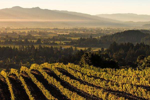 A Worldwide Napa Valley Rocks: How to Sell Napa Valley Wines