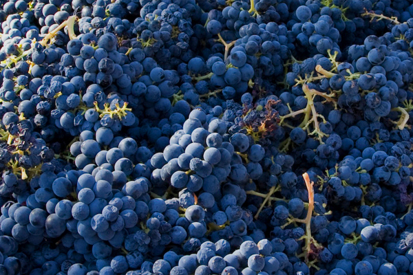 Napa Valley Sessions: An Exploration of Winemaking