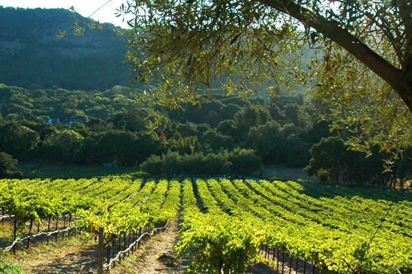 Library Wine Auction Special: Exploring the 'Cooler' Corner of Southeastern Napa Valley
