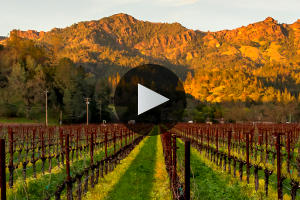 A Special Canadian Napa Session: Inside Napa Wine